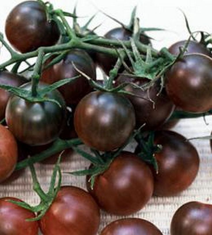 A black tomato, you ask...Yes, it's the Indigo-Rose variety, I say via